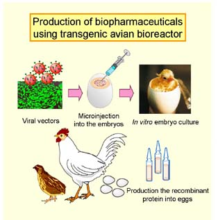 transgenic species use and production A genetically modified organism foods and are widely used in scientific research and the production of other transgenic plants have been engineered.